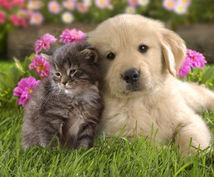 アニマルセラピー大切なペットの気持ちを伝えます ワンちゃん、ネコちゃんの本音を聞きたい方へ