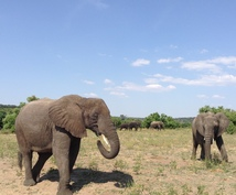 ビクトリアの滝の観光アクティビティの相場を教えます ジンバブエへ個人で旅行される方や、ツアー会社の方へ