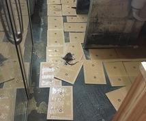 ゴキブリ等の不快害虫を完全駆除します 住宅、店舗で害虫にお困りのあなたに!!
