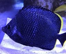 魚についての記事を詳しく書きます 現水族館飼育員が魚の魅力をお伝えします。