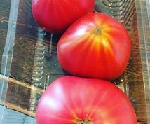 イタリアンの基本の黄金律トマトソース教えます 本格的なトマトソースのパスタソースでパスタを食べたい方