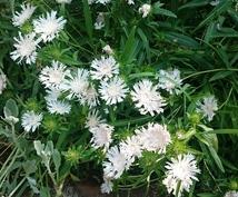 ガーデニング・お庭の相談お受けします ☆鉢花から植木の管理まで☆お庭に関する?にお応えします!
