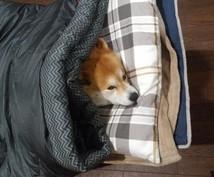 犬のお悩み相談お伺いします 犬と一緒に生活している人にオススメ!
