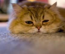 動物の病気でお困りの方の相談受付ます 犬、猫、うさぎ、ハムスター、小鳥など小動物専門