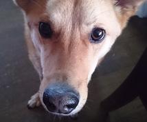 犬のお悩み解決します ●どんな犬種か、保護犬を飼おうか悩んでいるあなたへ