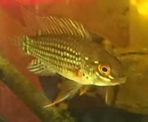 魚の飼育相談のります 日本産淡水魚から熱帯魚まであらゆる魚の飼育相談のります。