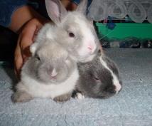 あなたのお家に総額1万円でウサギ☆導入サポート!