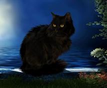 猫の占い魔法。本当のあなたはキラキラと輝いています 対話式であなたの気持ちに寄り添います。迷いを晴らす占いです。