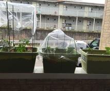 営農指導員一級の野菜作りを教えます