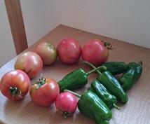 家庭菜園のアドバイスします どんな農薬や肥料を使えばいいか分からない方へ