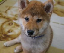 ☆最適な犬種☆プロドッグトレーナーが提案