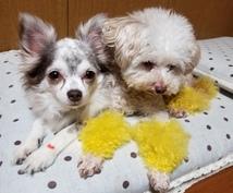 トリマーが犬についての相談雑談お聞きします 初めてのトリミング〜シニア犬のトリミング、サロンの選び方など