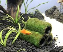 水槽のレイアウトします お魚さんを飼いたいあなたへお手伝いします!
