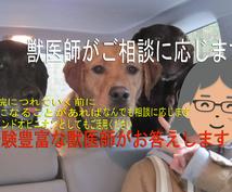 獣医師があなたのご相談を承ります 大切なご家族と楽しい日々を過ごすために心配事解決