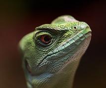 爬虫類に関する相談、すべて聞きます、答えます 飼育、輸出入、譲渡、販売、買取、駆除、何でも構いません!