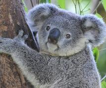オーストラリア留学、ワーホリ等の疑問にお答えします オーストラリア滞在歴10年以上。留学、ワーホリ、就職経験あり