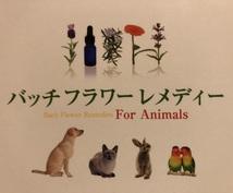 お花で癒すペットケア☆必要なレメディ教えます 自然療法でペットを癒したい方へ!バッチフラワーレメディ