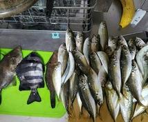 絶対に釣れる、潮、仕掛け、狙い方、餌、教えます 魚が釣れないあなたへ絶対に釣らせます!