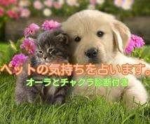 アニマルコミュニケーション!動物の気持ち代弁します ペットともっと仲良くなりたい方、ペットロスの方おすすめです♪