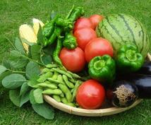 家庭菜園(野菜作り)でお困りの方へ。野菜農家がわかりやすくアドバイスします。