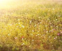 凝り固まった心と体を 優しい愛のエネルギーでほぐします
