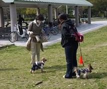 犬のしつけにお困りの方へ!!プロのドッグトレーナーが、お悩みに丁寧にアドバイス致します♪