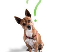 現役獣医師が飼主様の疑問にお答えします ~いつでも気軽にセカンドオピニオンを~