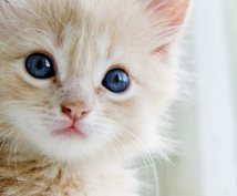 新しく家族になるペットの名前考えます ペットの名前が決まらない方に!