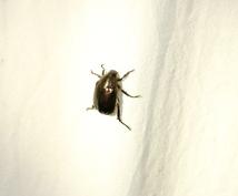 昆虫、鳥の識別をします。ます この虫は何て名前なんだろう。。。知りたくはありませんか?