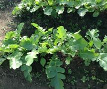 野菜を作りたい方お教えします 畑の確保の仕方から始まり収穫までをおおまかにお教えいたします