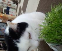 猫カフェ行ってみたいけど・・・どこがいいんだろうって方アドバイスなど教えます!