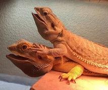 爬虫類、両生類、その他昆虫類の飼育法、相談のります!