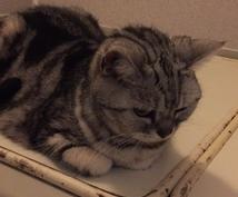猫ちゃんに関する事を伝えます 猫ちゃんの困った事やクセ  脱走  なんでも  相談します