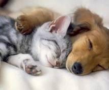 ペット飼育の悩み相談を受け付けます ペットを飼う中で分からない事があればお答えします。
