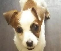 可愛いペットとあなたの気になる相性をみます これから飼う方、すでに飼っている方もOKです