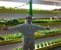 植物工場のこと知りたい人教えます!