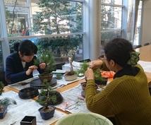 盆栽お手入れ講座 日々の管理の相談ます あなたの盆栽に合った管理、手入れの方法をアドバイスします。