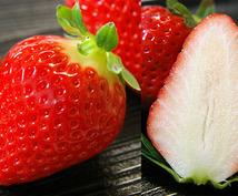 家庭で作るおいしい苺の作り方!あなたも作ってみませんか?