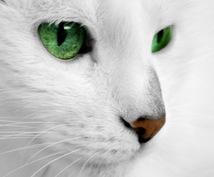 彼の気持ちとお2人の未来教えます ◆◇高的中率白猫タロット占い◇◆リピーター様専用