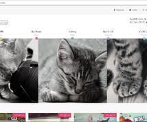 ねこ専門サイトで里親募集or自慢の愛猫紹介をします 愛猫をスターにしたい方へ♪状況に応じてねこ関連グッズ紹介も◎