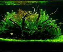 水草レイアウトの方法や熱帯魚の飼い方教えます 熱帯魚の飼い方解決!水草レイアウトもお任せ!