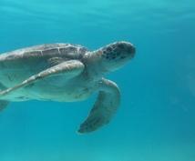 沖縄旅行のガイドをします 沖縄が初めての方も何回か来ている方も楽しく案内します。