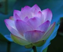 現役占い師による霊感、霊視で近未来視ます あなたの不安、気落ちなど心を向き合い丁寧に鑑定いたします。