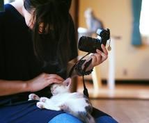 うちのペット撮るのはどのカメラ?相談受け付けます 新中古・メーカー・一眼レフにこだわらずペット撮影カメラ提案