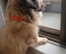 動物の気持ち、感情をあなたにお伝えします 動物と絆を深めたい方にオススメ‼︎