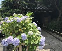 鎌倉おすすめスポットを地元ママの目線でお伝えします 地元の人しか知らない名店、穴場スポットなど