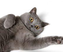 獣医が丁寧にワンちゃん、猫ちゃんの相談にのります 動物達と暮らして行く中で起こる様々な疑問にお答えします