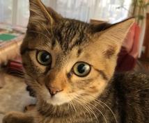 現役獣医が可愛いペットのお悩みに回答します 飼育や病気に関する事を些細な疑問からお受けいたします!