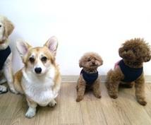 愛玩動物飼養管理士がご愛犬のご相談に乗ります わんちゃんの飼い方、躾け方、ご飯や生活面でお悩みの方へ