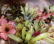 観葉植物の事、ご相談にのらさせて頂きます 観葉植物初心者の方に、オススメ!!